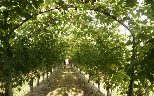 Le Vin au fil des Sens